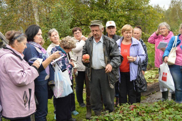 виноград уход осенью подготовка