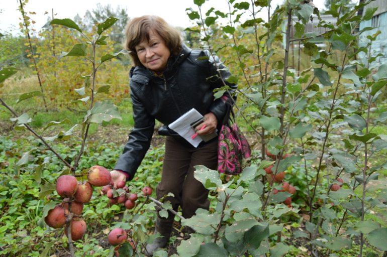 виноград уход осенью подготовка 10