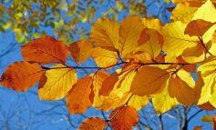 Погода в Хабаровске на выходные: теплый октябрьский уикенд