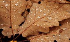 Погода на выходные в Хабаровске: сильный ветер и дождь