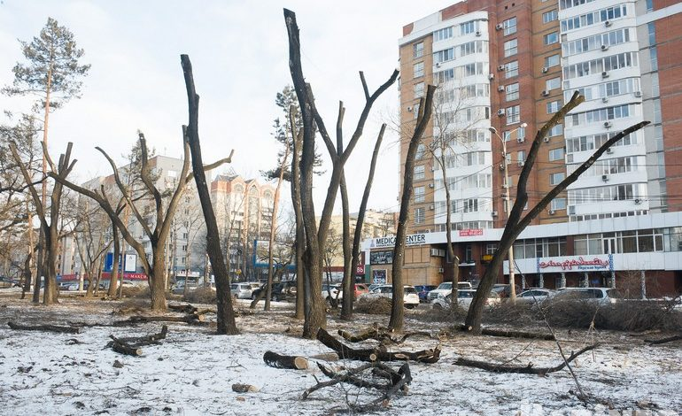 Крупная рубка в Хабаровске: бульвары заметно «полысели»