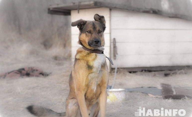 Всем по наморднику: новый закон об обращении с животными вступил в силу