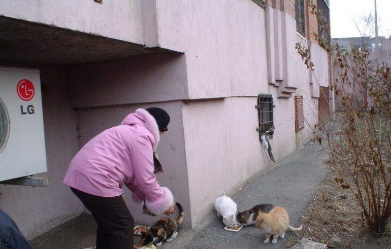 бездомные кошки 1