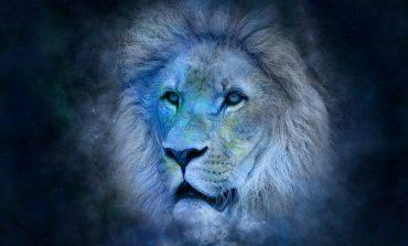 Гороскоп для Льва на 2019 год: любовь, семья, карьера