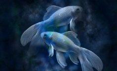 Гороскоп для Рыбы на 2020 год: любовь, семья, карьера