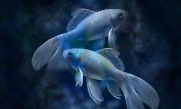Гороскоп для Рыбы на 2019 год: любовь, семья, карьера