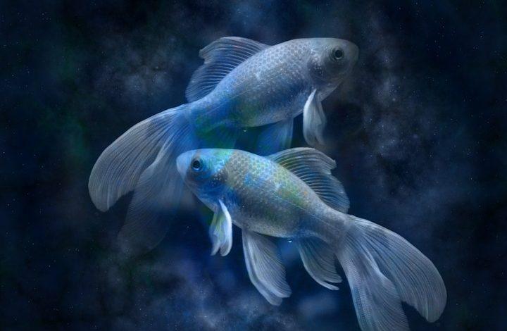 Гороскоп для Рыбы на 2021 год: любовь, семья, карьера