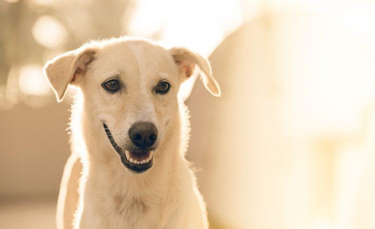 Гороскоп для Собаки на 2021 год: отношения, карьера, семья