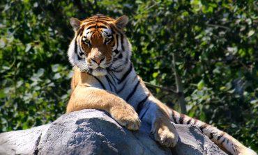 Гороскоп для Тигра на 2019 год: отношения, карьера, семья