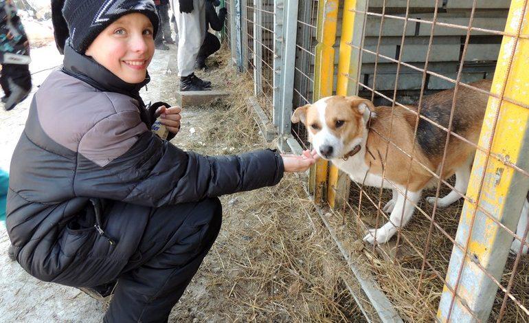 Неделя сытой жизни: как прокормить 80 собак