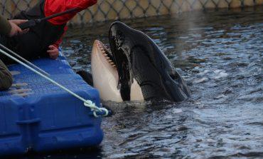 Тюрьма китового режима: хабаровских зоозащитников обвинили в получении денег «от госдепа»