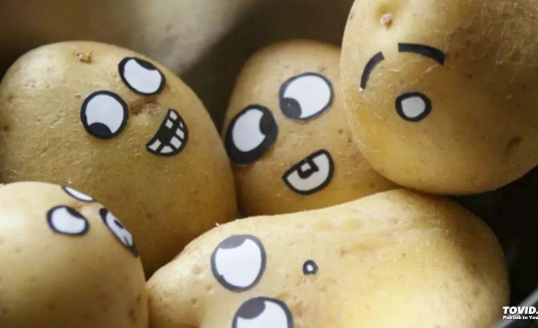 Личный опыт выращивания картофеля под листвой