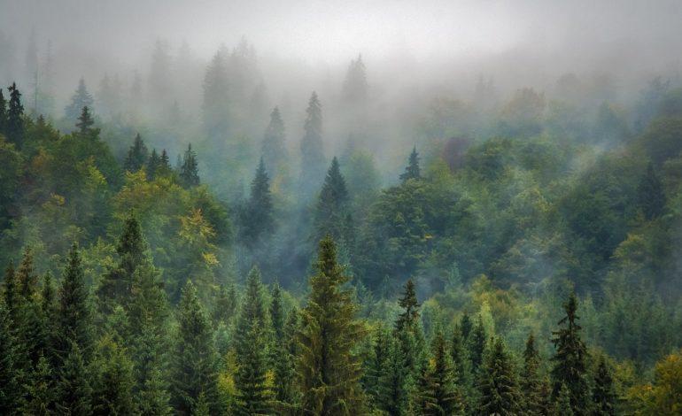 Председатель «Зеленых»: в заповедных территориях края ведутся промышленные рубки