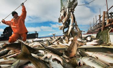 Борьба аборигенов за рыбу: закон или дышло?