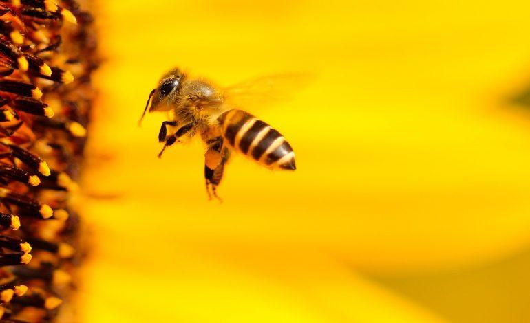 От хабаровских пчеловодов хотят промышленных объемов