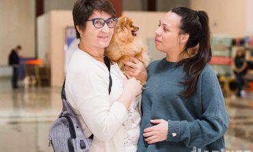 Собачьи смотрины: зачем эксперты заглядывают псу под хвост?