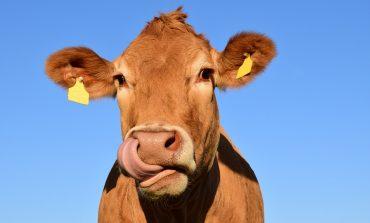 Можно ли найти в хабаровских магазинах натуральное фермерское молоко?