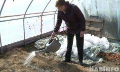 «Клюкву нужно культивировать». Эксперимент по выращиванию ягоды в Хабаровске