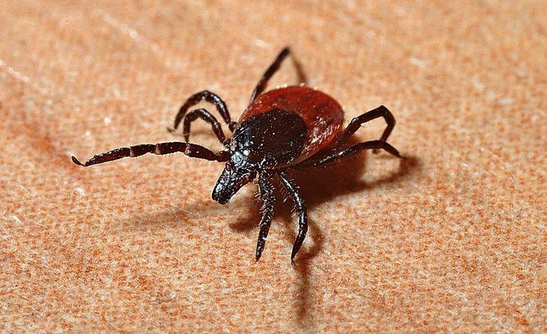 Клещи на старте: кто спасет хабаровчан от опасных насекомых?