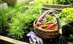 Итоги «круглого стола»: о чём договорились садоводы с чиновниками