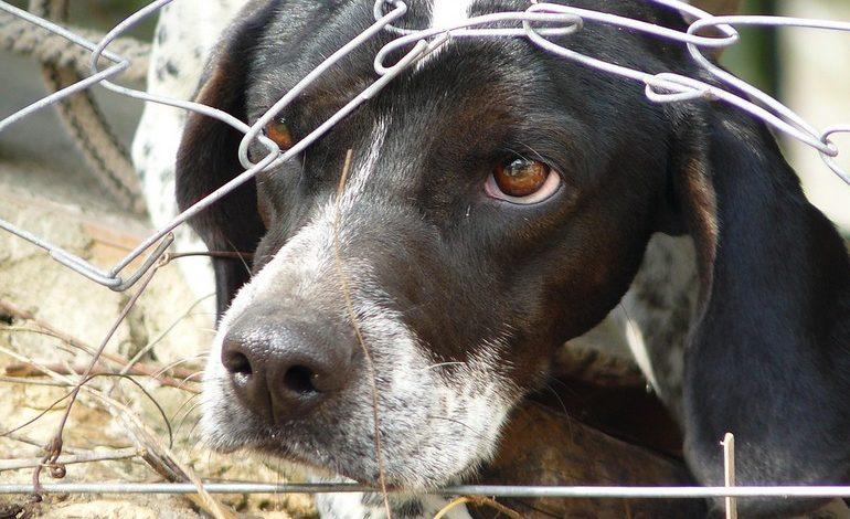 Где в Хабаровском крае взять 30 миллионов на бродячих собак