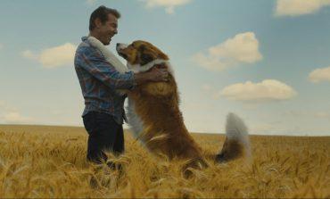 «Собачья жизнь 2» и ещё четыре семейных картины 2019 года