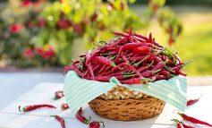 Секреты выращивания перца