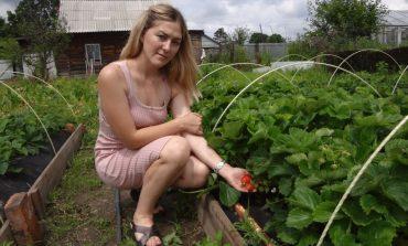Дача молодости не помеха: тридцатилетняя хабаровчанка выращивает экоклубнику