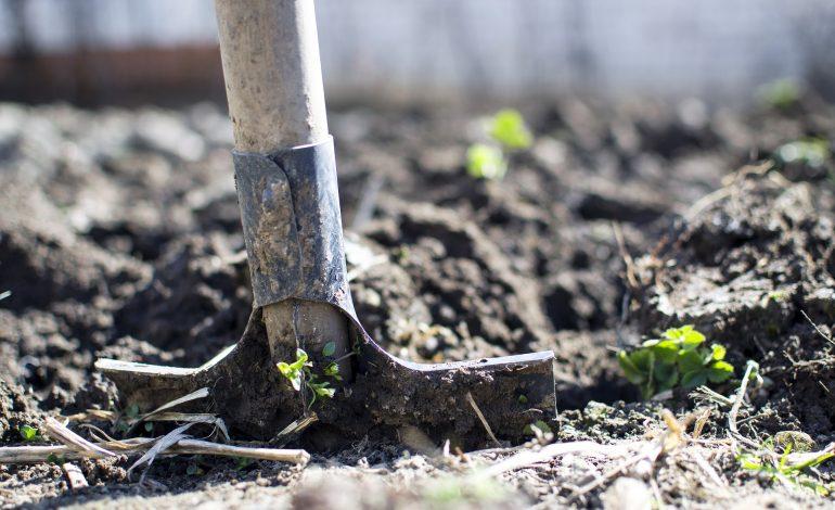 Прорастание семян и борьба с долгоносиком: полезные советы для дачников