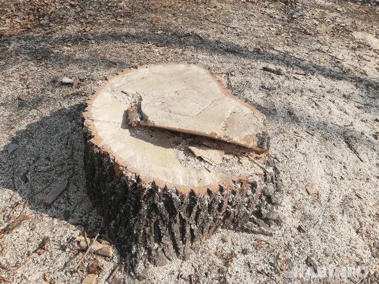 срубить дерево 1