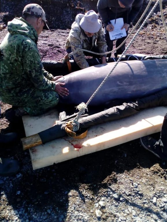 китовая тюрьма новости 4