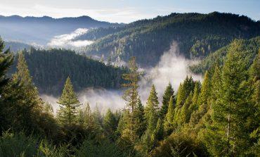Теплицы раздора: управление лесами края хочет «отжать» бизнес инвестора?