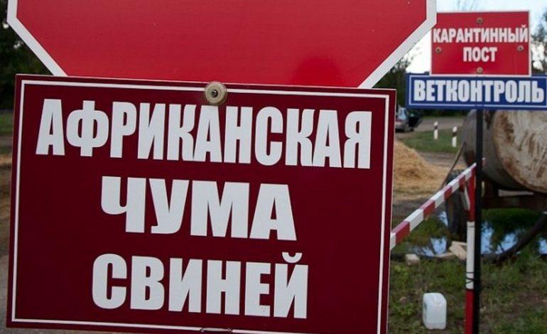 Новый режим ЧС в Хабаровском крае: африканская чума свиней