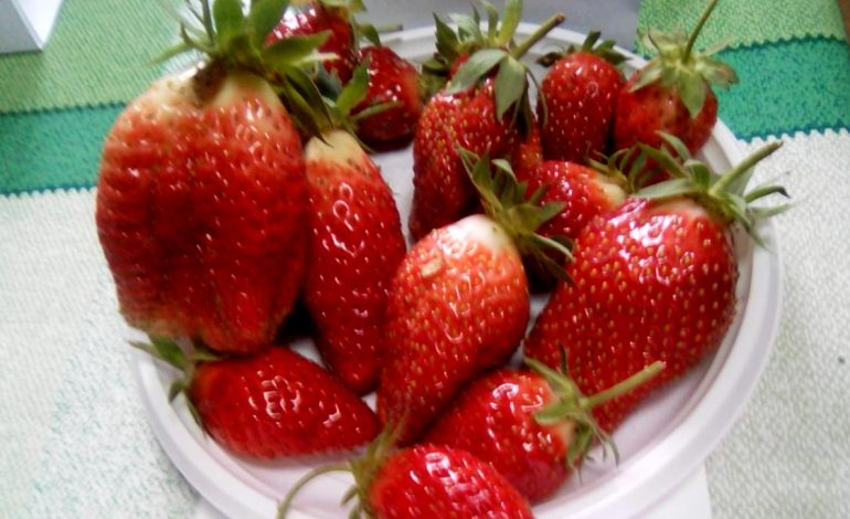 Самая желанная ягода: земляничная выставка прошла в «Дачном счастье»