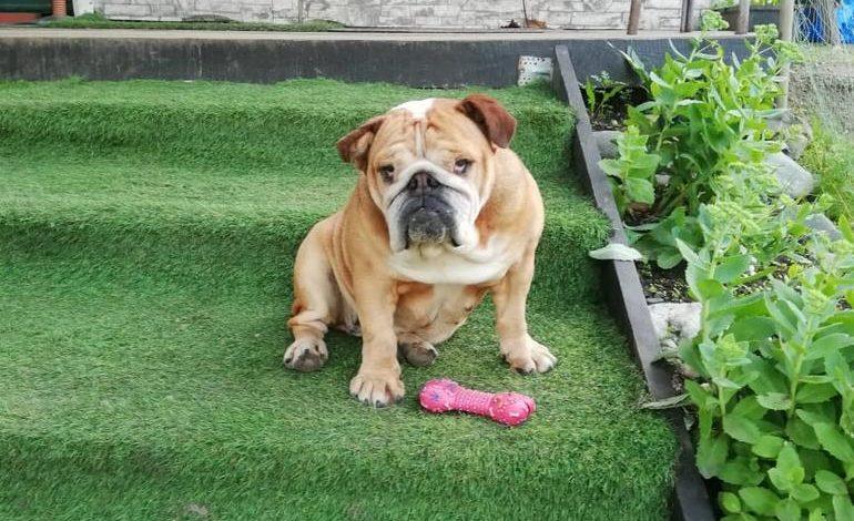 Особо «кусачие» породы: хабаровчане предпочитают ласковых собак