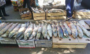 Рыбный дух: нелегалы снабжают хабаровчан «свежим» деликатесом