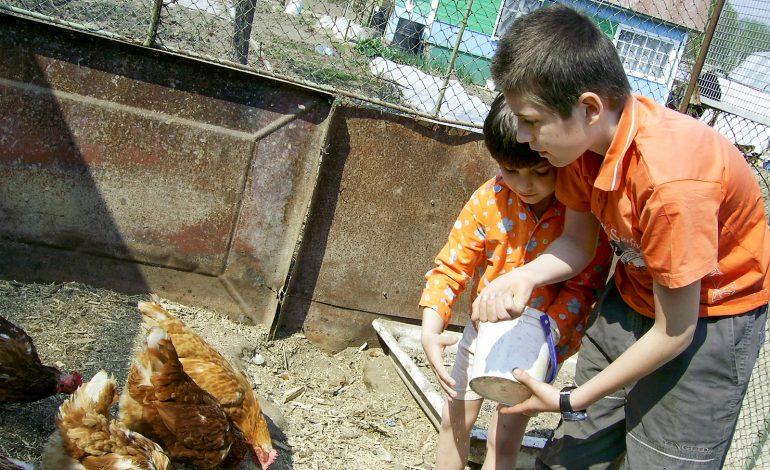 Сельское хозяйство «колбасит»: в Хабаровском крае решили выращивать тритикале