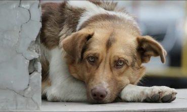 Люди и собаки: как хабаровчанам ужиться с ними в одном городе?