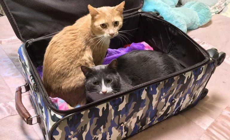 В путешествие с котом: перевозить животных самолётом стало дороже
