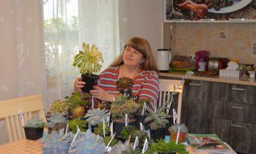 Потратить полдня на цветочное хозяйство: фанатка суккулентов Ольга Палиоха