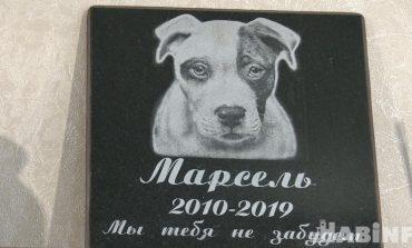 Как достойно похоронить питомца: кладбище домашних животных по-хабаровски