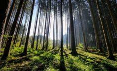 На Дальнем Востоке продолжат увеличивать долю переработки леса