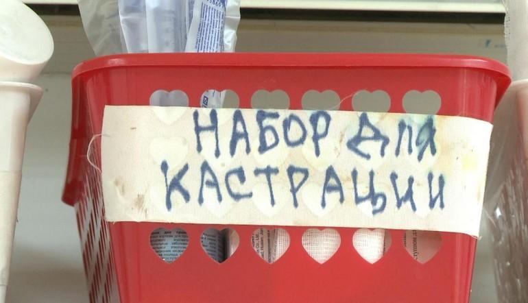 Кто в Хабаровске стерилизует бродячих животных