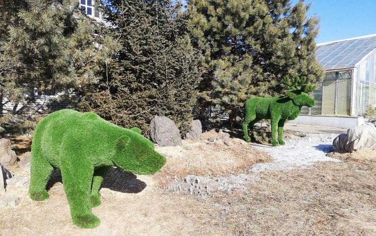 Полмиллиона цветов и звери из травы: в «Горзеленстрое» рассказали что нового будет в Хабаровске