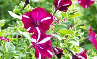 Новинки на клумбах: «Горзеленстрой» готовится украсить Хабаровск цветами и деревьями