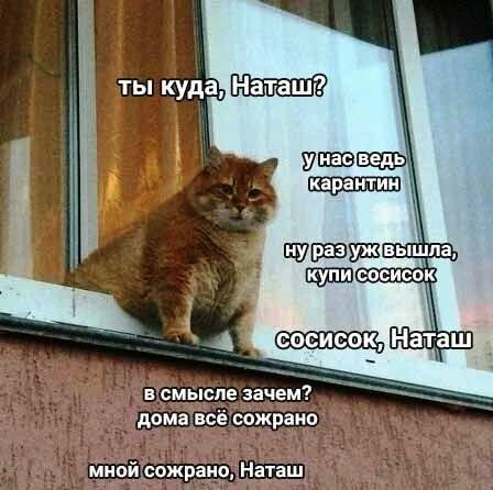 Мемы с котами: Наташ, почему мы такие милые?