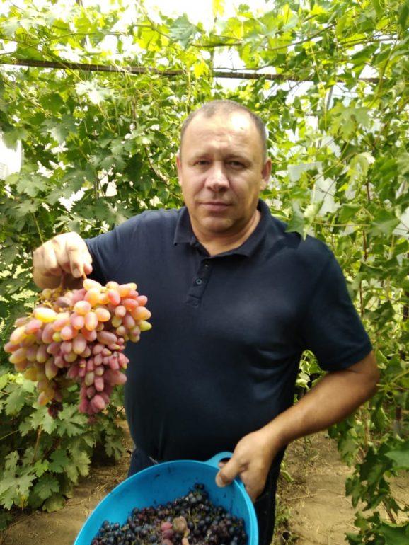 Виноградарь из Благовещенска замахнулся на промышленное производство
