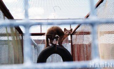 Льву – мясо, а кроликам – капуста: зоосаду в посёлке Гаровка нужна помощь