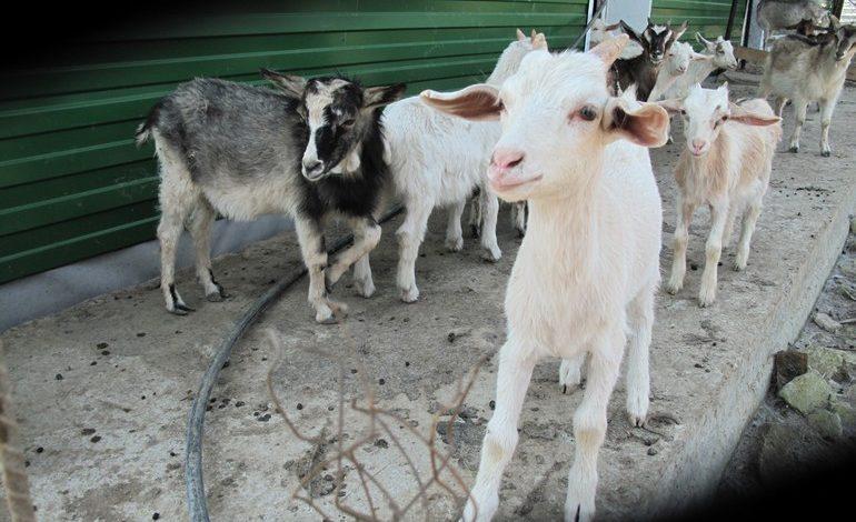 Агростартаперрам и семейным фермам в Хабаровском крае дадут гранты