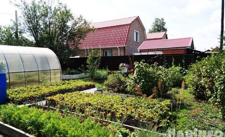 Дачные страсти: хабаровские садоводы выясняют, чей участок круче